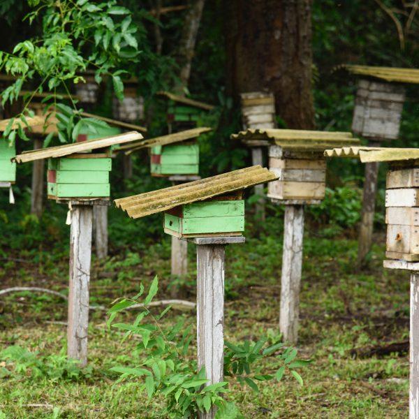 Assunto: Meliponario - criacao de abelhas sem ferrao do tipo canudo ou tucano natural da regiao na comunidade de ribeirinhos de Ana na Resex - Reserva Extrativista Tapajos Arapiuns  Local: Santarem - PA Data: 03/2017 Autor: Luciana Whitaker