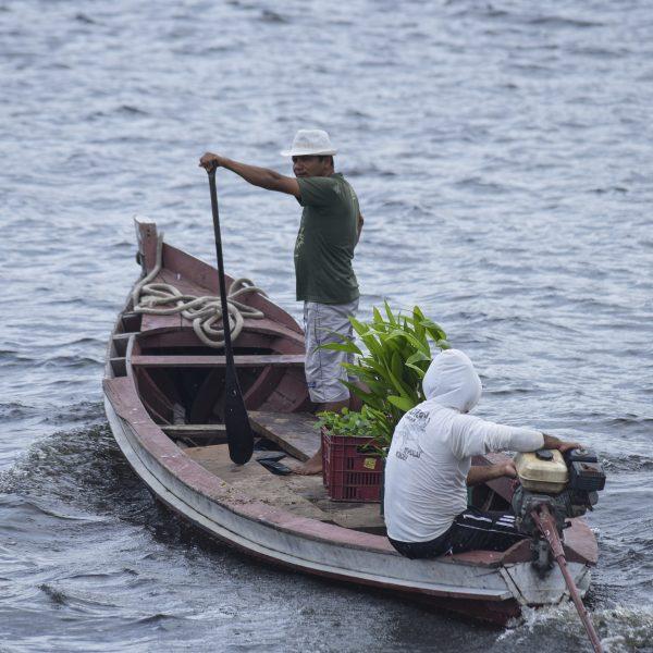 Assunto: Bajara do projeto Social Saude e Alegria leva mudas de plantas amazonicas na comunidade Maripa na Resex - Reserva Extrativista Tapajos Arapiuns - no rio TapajosLocal: Santarem - PA Data: 03/2017 Autor: Luciana Whitaker