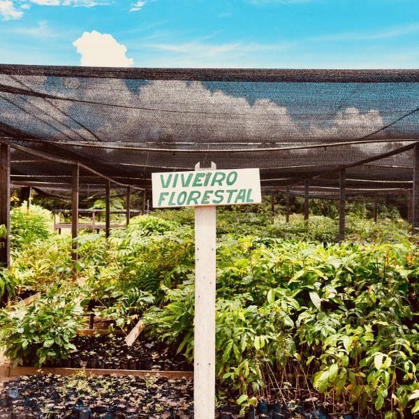 Assunto: Viveiro florestal - estufa de mudas para serem distribuidas e plantadas na Resex no CEFA - Centro Experimental Floresta Ativa em Carao na Resex - Reserva Extrativista do Tapajos  Local: Santarem - PA  Data: 03/2017  Autor: Luciana Whitaker/ Pulsar Imagens